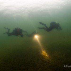 Duikers in Bronsbergen. © Patrick van Gemert