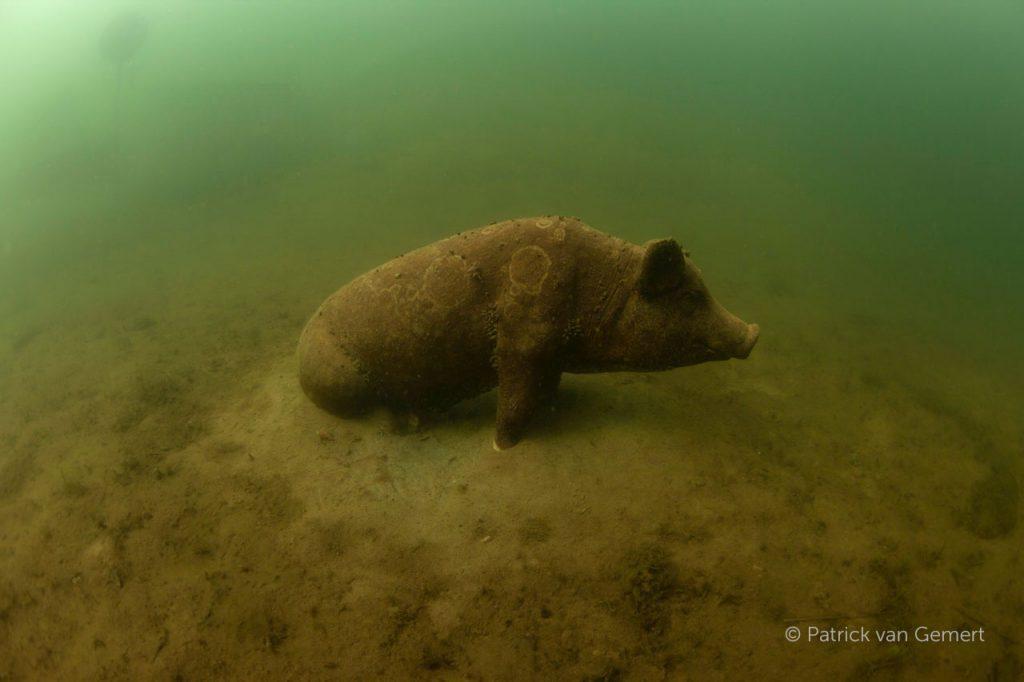 Het varken van Bronsbergen. © Patrick van Gemert